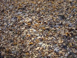 落ち葉の絨毯.jpg